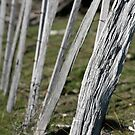 farmscapes #14, fenced,  by stickelsimages