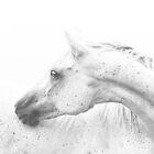 Silver Dapple  by Su Walker