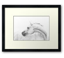 Silver Dapple  Framed Print