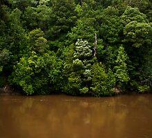 King River by Shane Viper