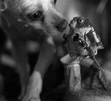 Chihuahua and the Quality Control Message by Corri Gryting Gutzman