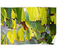 Frond Leaves Detail Poster