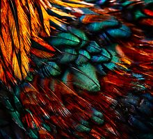 Feathered #1 by Su Walker