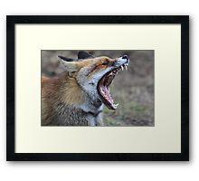 Fox - 1288 Framed Print