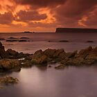 Trefoil island by Claire Walsh