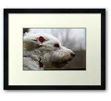 my dog at 40mph Framed Print