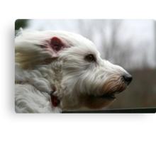 my dog at 40mph Canvas Print