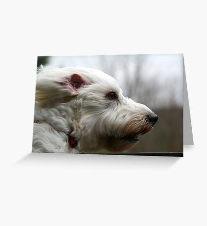 my dog at 40mph Greeting Card