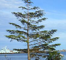 Lone Tree - Stornoway by MidnightMelody