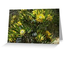 An aberrant form of Isopogon anemonifolius with entire leaves Greeting Card