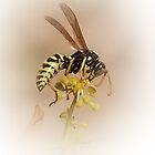 Wasp by steveransome
