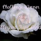 Elegant Rose by AnnDixon