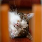 Cat in Dreams by vbk70