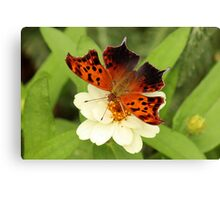 Question Mark Butterfly on Flower Canvas Print