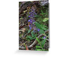 Austral bugle, Ajuga australis Greeting Card