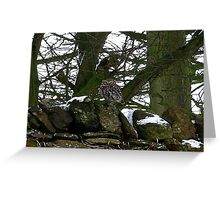 Little Owl/non captive Greeting Card