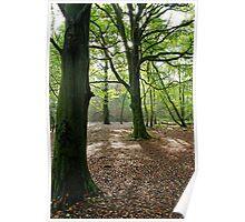 Woodland, Reigate Hill, Surrey Poster