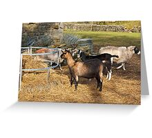 Winter Feed Greeting Card