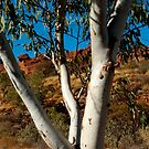 Whistling Gum Tree Leaves in the silence of Kings Canyon by Matt Bishop