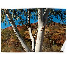 Whistling Gum Tree Leaves in the silence of Kings Canyon Poster