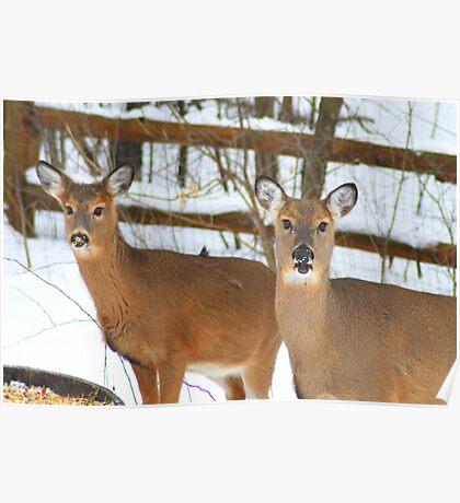 Deer - Mother Daughter Bond Poster