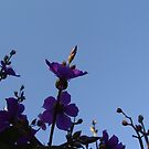 Reach for the sky. by Annabella