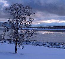 Winter tree-I by Frank Olsen