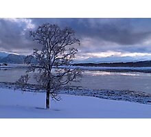 Winter tree-I Photographic Print