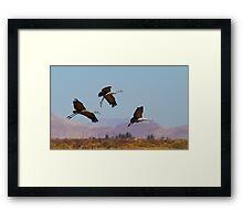 021111 Sandhill Cranes Framed Print
