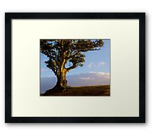 Durability and Strength, Wilpena, South Australia. Study #5 Framed Print