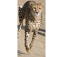 Cheetah On the Run Photographic Print