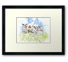 Bincombe Cows Framed Print