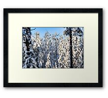 A Birch On White Pines Framed Print