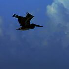 Pelican in Flight by Kent Nickell