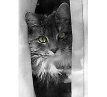 Cat with Green Eyes Photographic Print