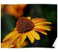 False Sunflower Poster