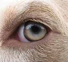 I've Got My Eye On You by Ginny York