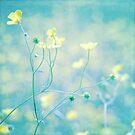 Dear little buttercup... by Claire Penn