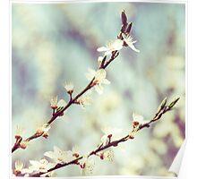 Dreams blossom Poster