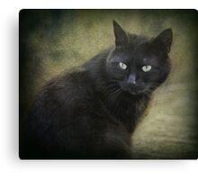 Blacky green eyes  Canvas Print