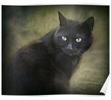 Blacky green eyes  Poster