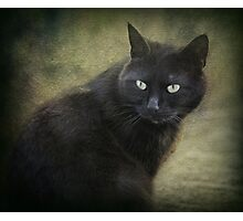 Blacky green eyes  Photographic Print