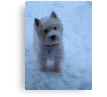 Winter White - West Highland White Terrier Canvas Print