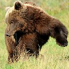 Doin' the bear romp by Alan Mattison