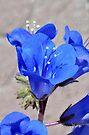 Little Blue Flower by MaryLynn