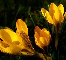 Clusters Of Sunshine by Susie Peek