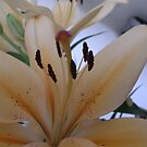 Oh beautiful Lilly.... by supernan