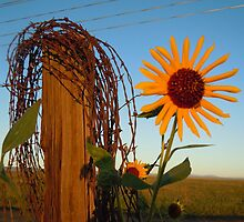 Wires - Castle Rock, Colorado by Marijane  Moyer