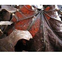 Fall Maple Leaf Photographic Print