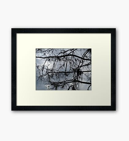 Bare Branches - December in Bayou George, FL Framed Print